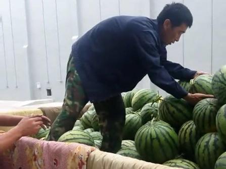 帮助凌海大业镇瓜农解决滞销西瓜2000斤